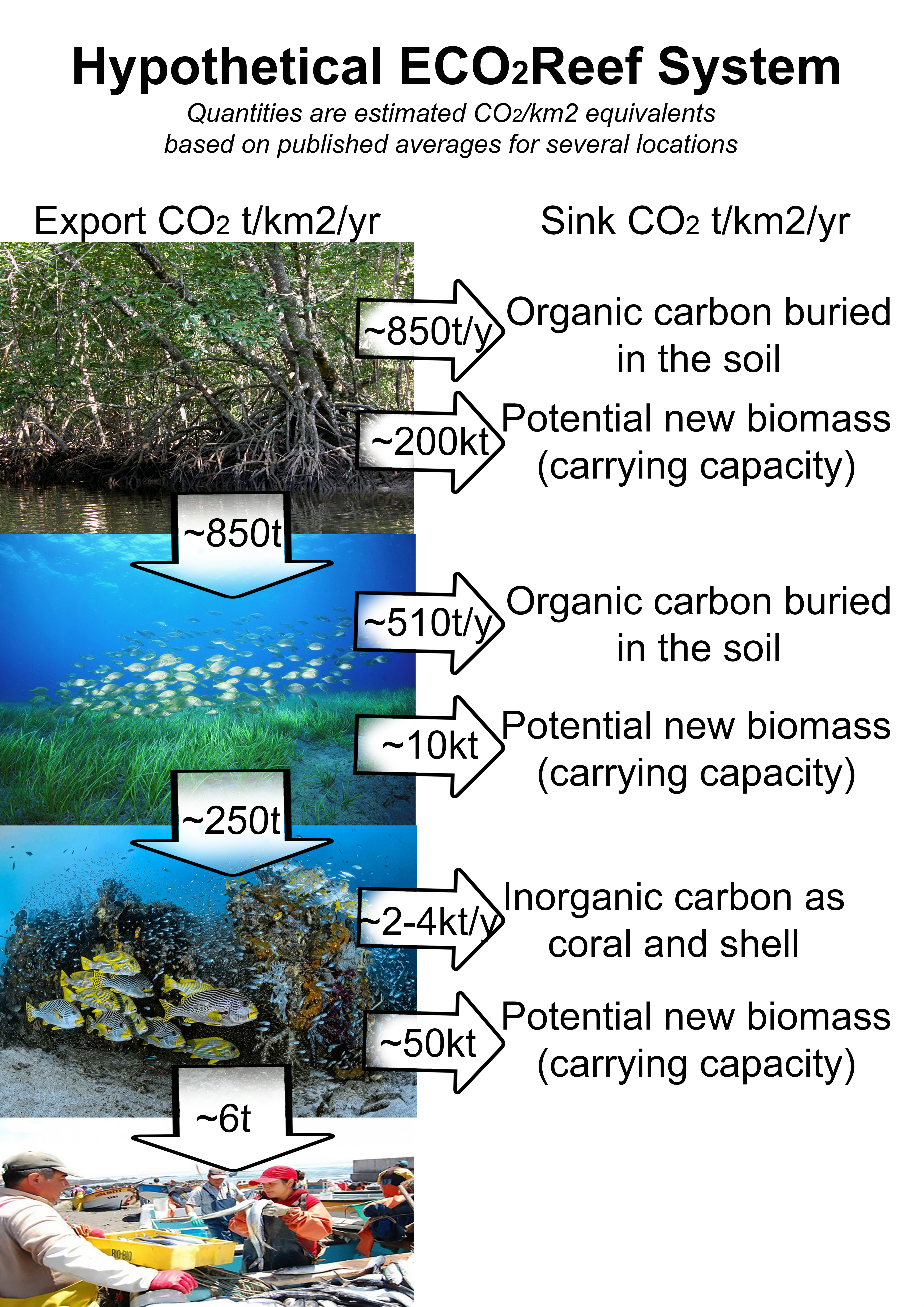 Hypothetical ECO-Reef Flow Diagram carbon offset removed